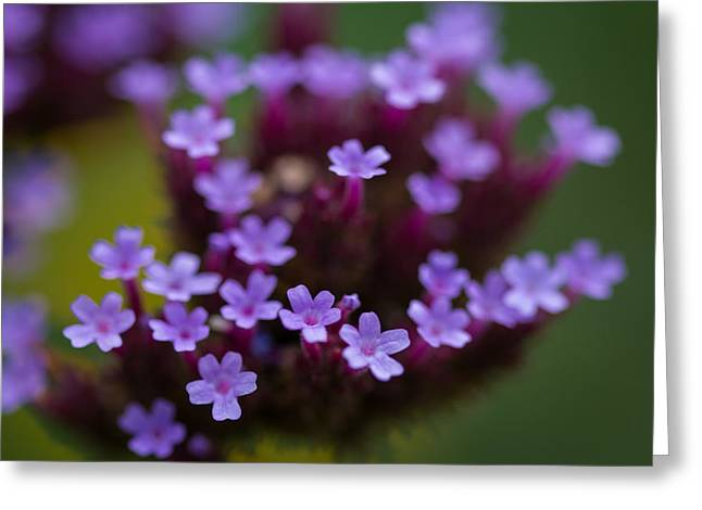 tiny blossoms II Greeting Card by Andreas Levi