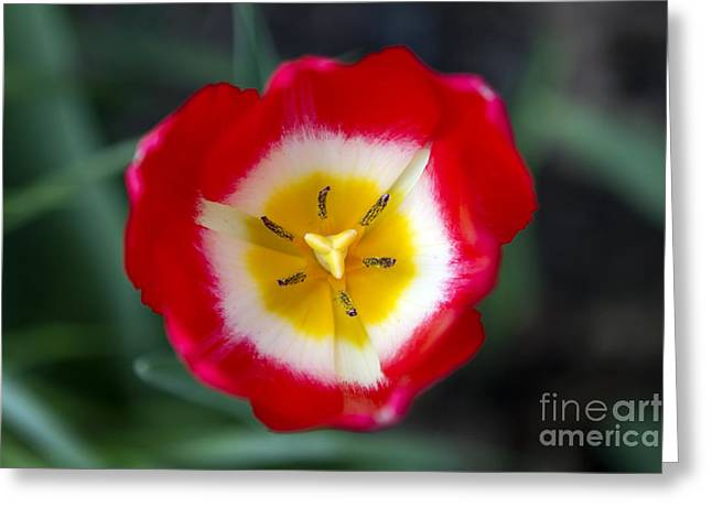 Greeting Card featuring the photograph Tiny Fireball by Thanh Tran