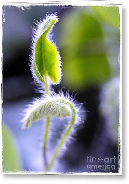 Tiny New Leaves Greeting Card by Judi Bagwell
