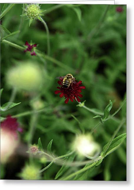Greeting Card featuring the photograph To Bee by Lorraine Devon Wilke