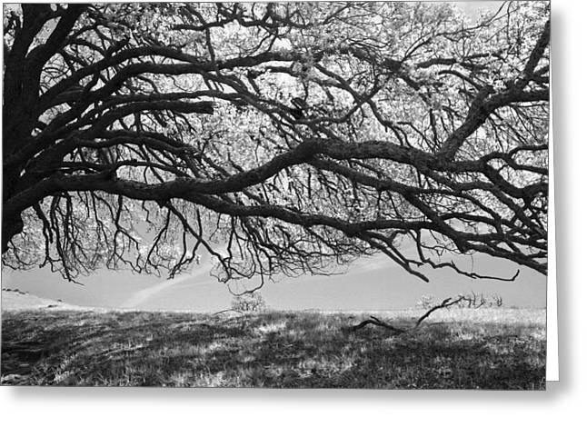 To Lie Here With You Would Be Heaven Greeting Card by Laurie Search