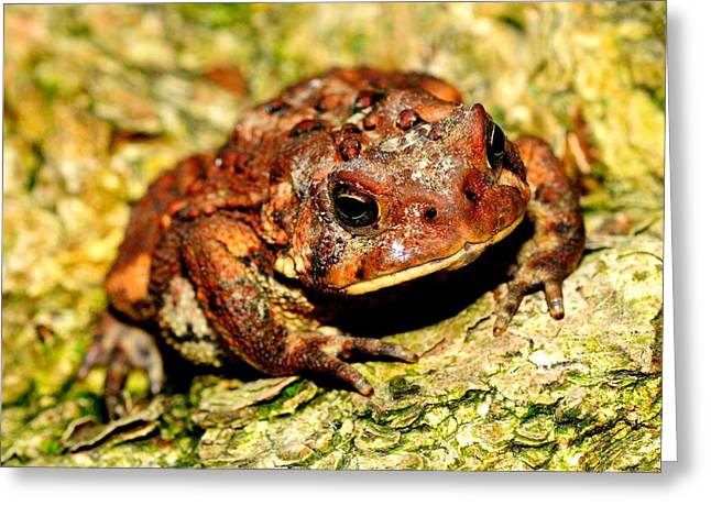 Greeting Card featuring the photograph Toad by Joe  Ng