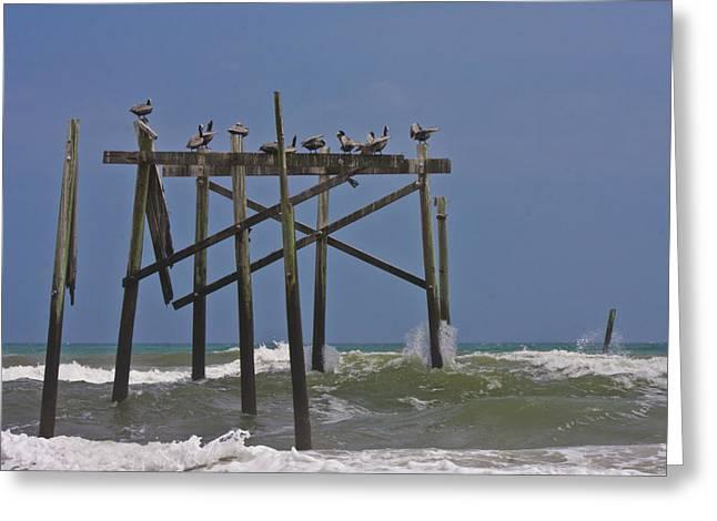 Topsail Ocean City Pelicans Greeting Card by Betsy Knapp