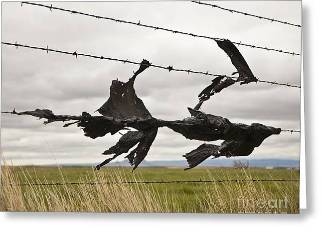 Torn Bags On A Barbed Wire Fence Greeting Card by Paul Edmondson