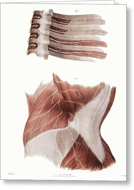 Torso Nerves Greeting Card by Sheila Terry