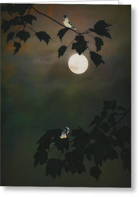 Touched By The Moon Greeting Card by Tom York Images