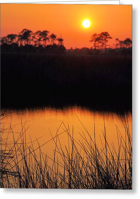 Toward The Light Greeting Card by Jan Amiss Photography