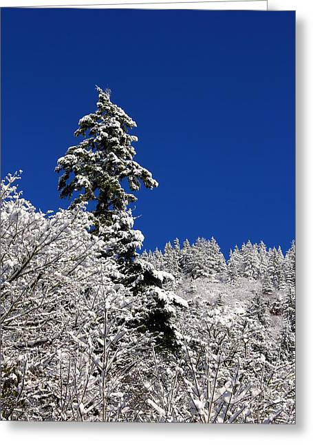Towering Tree On Snow Covered Mountain Greeting Card