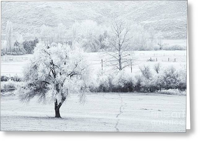 Tracks In The Frost Greeting Card by Mike  Dawson