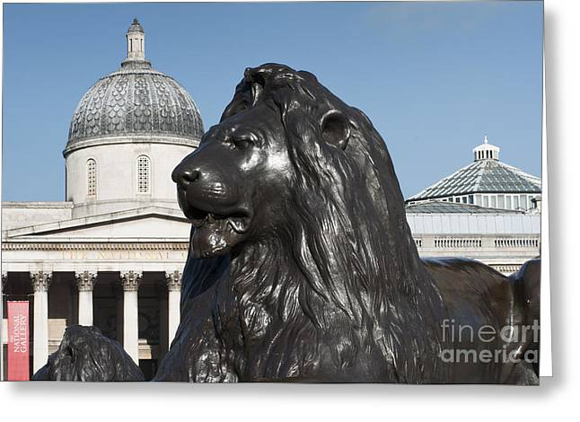 Trafalgar Square Lion Greeting Card by Andrew  Michael