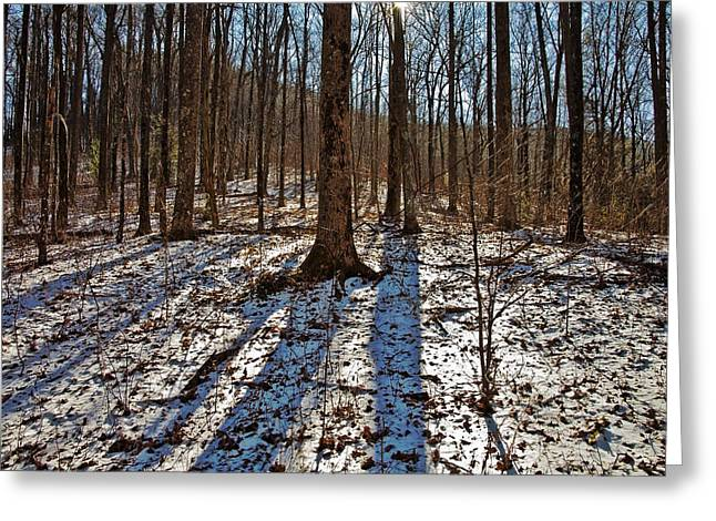 Trail In Winter Greeting Card by Susan Leggett