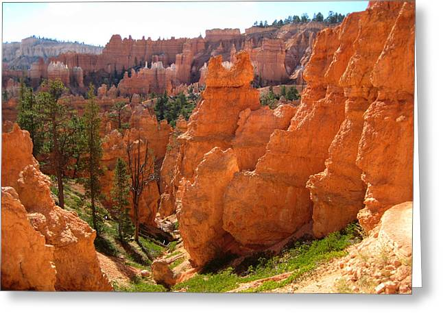 Trail View Bryce Canyon Greeting Card