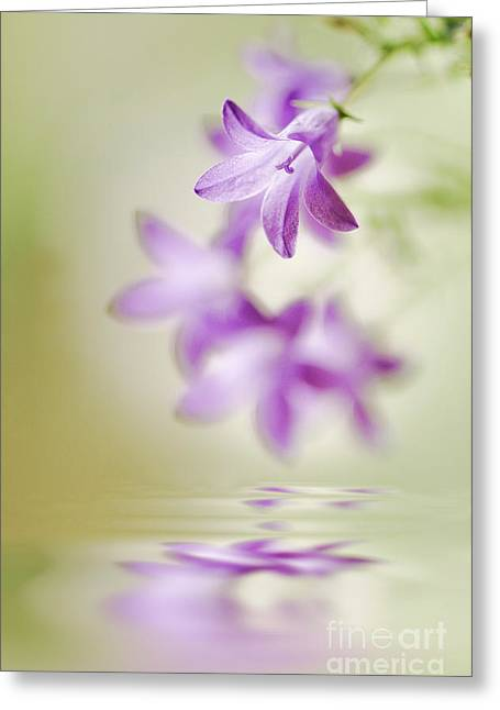 Tranquil Spring Greeting Card by Jacky Parker