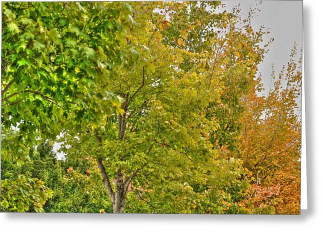 Greeting Card featuring the photograph Transition Of Autumn Color by Michael Frank Jr