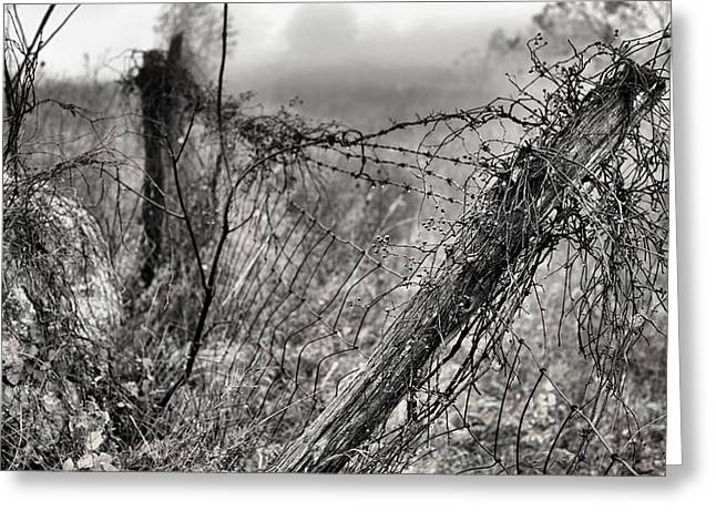 Trapped Greeting Card by JC Findley