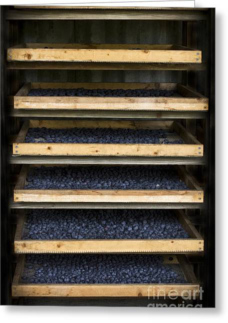 Trays Of Blueberries Greeting Card
