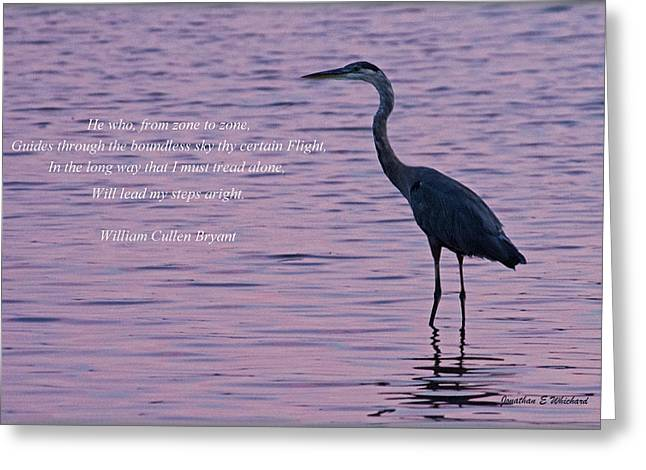 Treading Alone   Great Blue Heron  Greeting Card by Jonathan Whichard