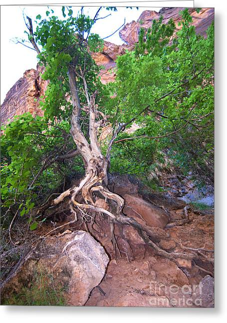Tree Along The Trail Greeting Card by Bob and Nancy Kendrick