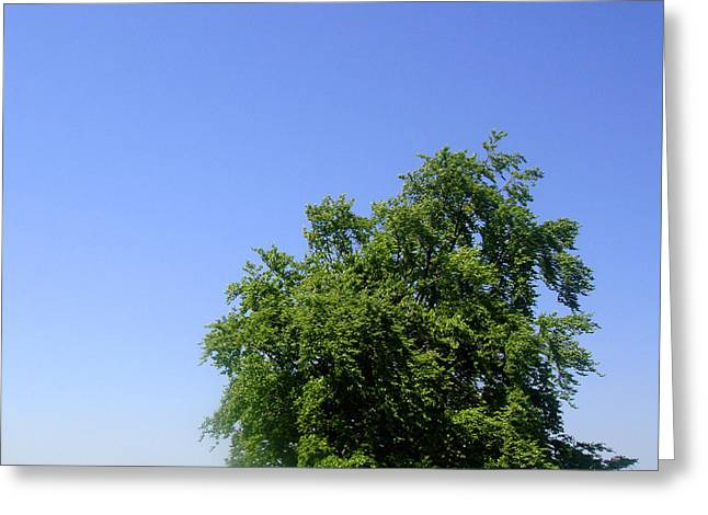 Tree And Field Greeting Card by Roberto Alamino