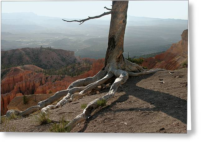 Tree And Roots In Bryce Canyon Greeting Card by Randall Nyhof