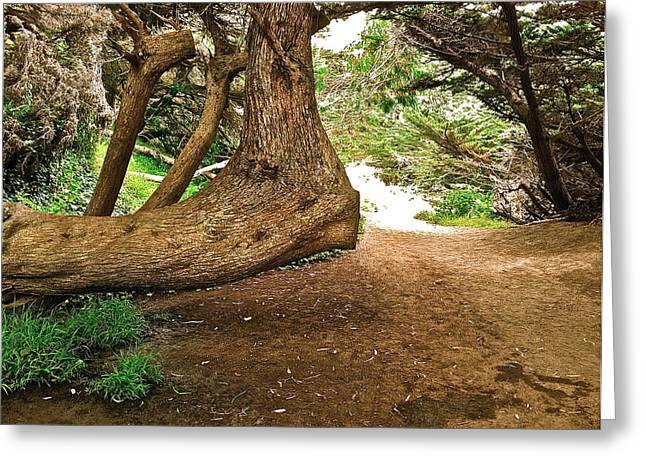 Tree And Trail Greeting Card by Bill Owen