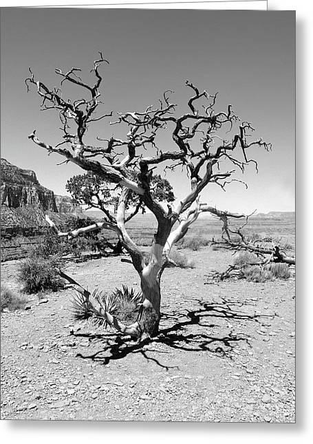 Tree At Cedar Ridge Bw Greeting Card by Julie Niemela