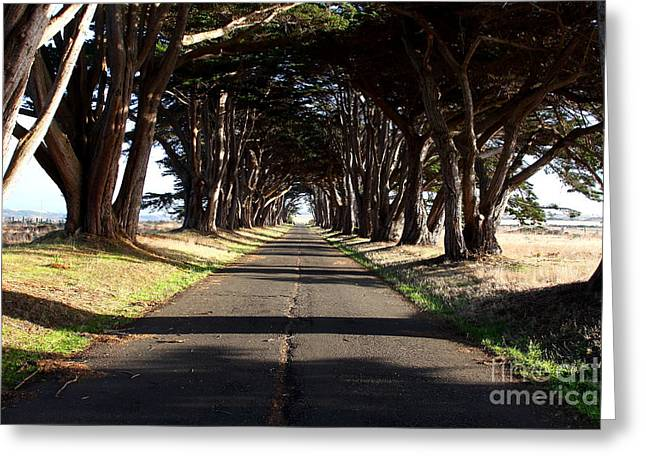 Tree Canopy Promenade Road Drive . 7d9959 Greeting Card by Wingsdomain Art and Photography