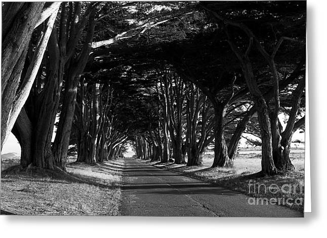 Tree Canopy Promenade Road Drive . 7d9977 . Black And White Greeting Card