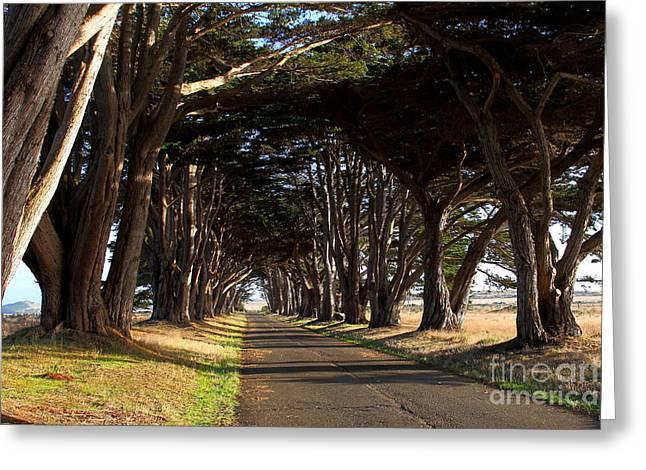 Tree Canopy Promenade Road Drive . 7d9977 Greeting Card