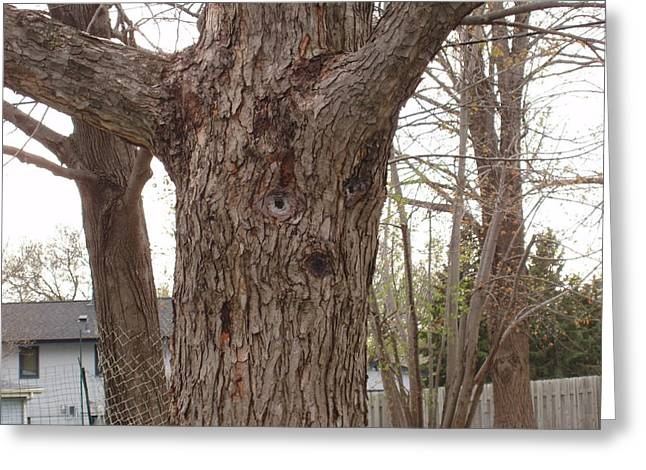 Tree Face Greeting Card by Lori  Theim-Busch