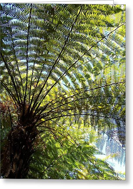 Tree Fern Greeting Card by Peter Mooyman