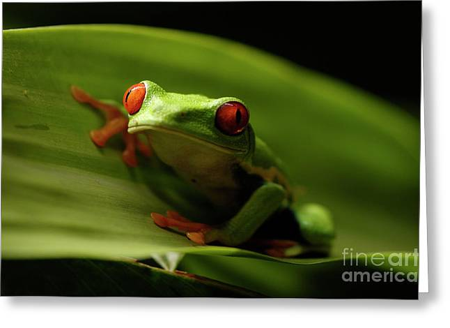 Tree Frog 10 Greeting Card by Bob Christopher