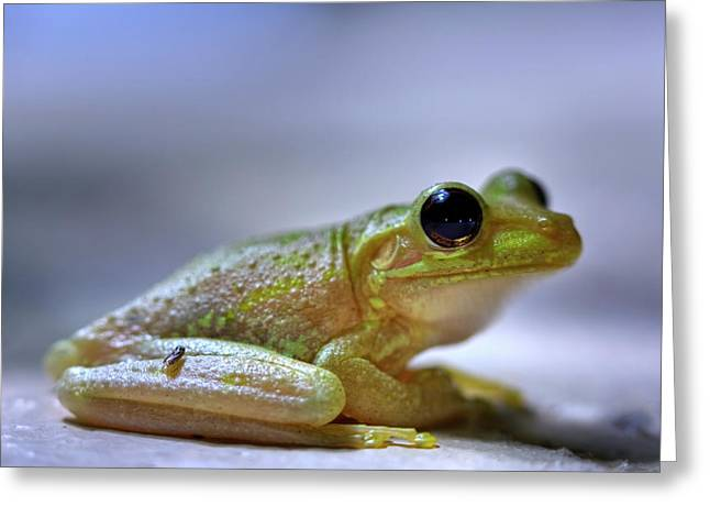 Tree Frog Greeting Card by Nick  Shirghio