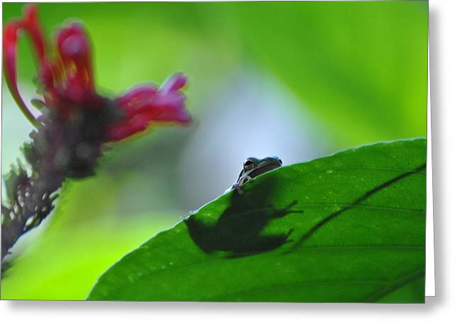 Greeting Card featuring the photograph Tree Frog Peeking Over Leaf by Jodi Terracina
