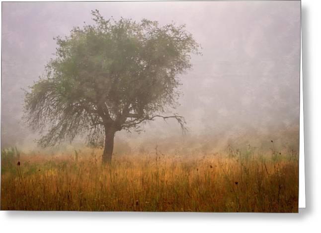 Tree In Fog Greeting Card by Debra and Dave Vanderlaan