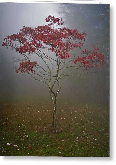 Tree In Fog Greeting Card