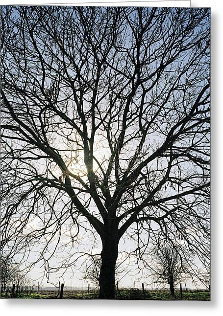 Tree In Silhouette Greeting Card by Michael Marten