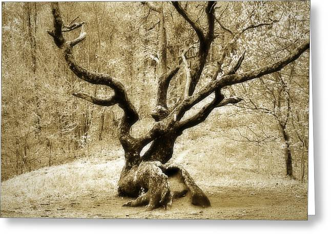 Tree In The Forest Greeting Card by Susan Leggett