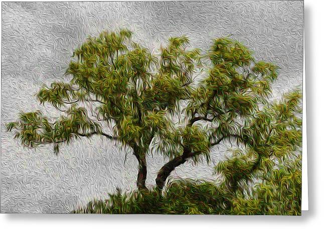 Tree In The Wind Greeting Card by Celso Bressan