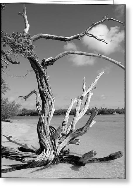 Tree In Tobago Greeting Card by Julie VanDore