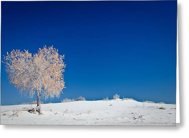 Tree In White Sands Greeting Card by Ralf Kaiser