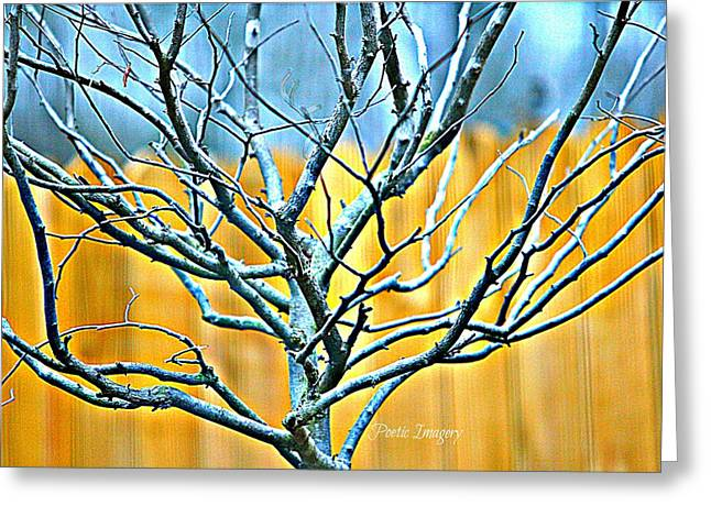 Tree In Winter Greeting Card by Debbie Sikes