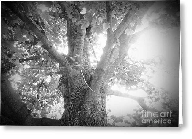 Tree Greeting Card by Jeremy Wells