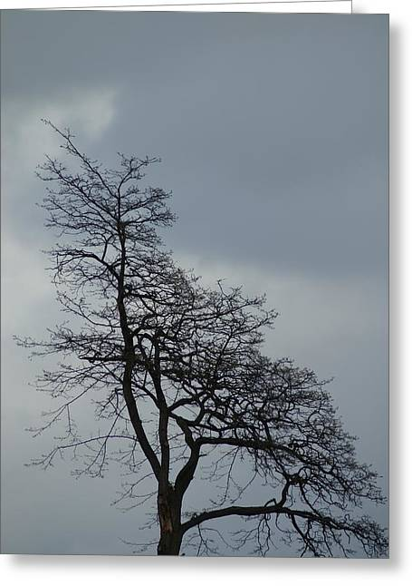 Greeting Card featuring the photograph Tree by Jerry Cahill