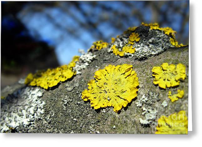 Greeting Card featuring the photograph Tree Lichen by Ausra Huntington nee Paulauskaite