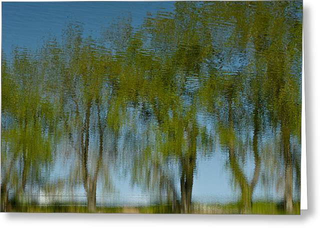 Tree Line Reflections Greeting Card