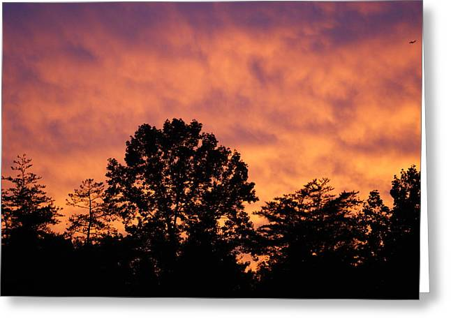Tree Lined Skies Greeting Card