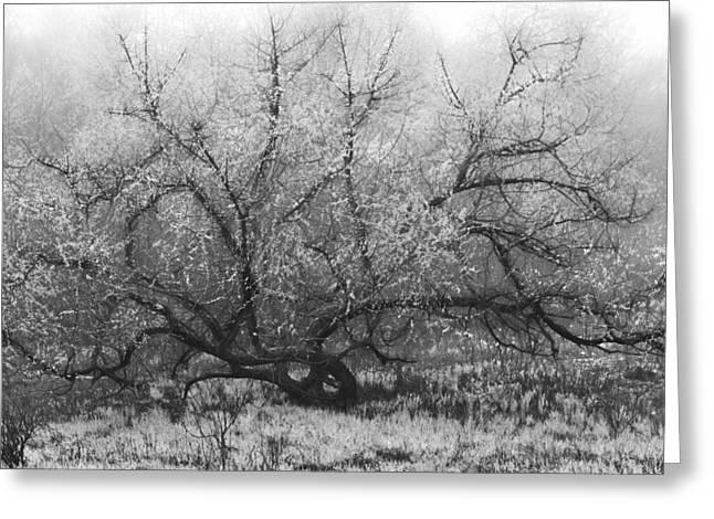 Tree Of Enchantment Greeting Card