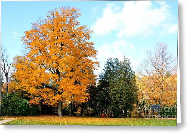 Greeting Card featuring the photograph Tree Of Gold by Joe  Ng