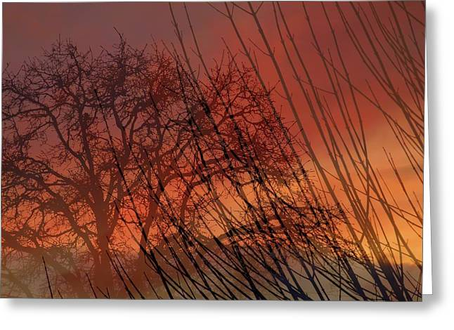 Tree Of Life Sunset Greeting Card by Cindy Wright